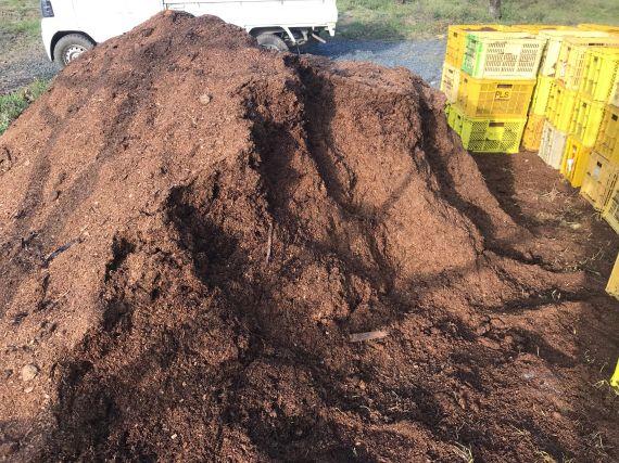 次郎柿 馬糞堆肥