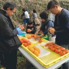 干し柿作り体験