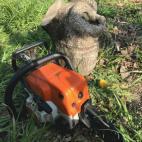 柿の間伐作業
