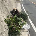 地元の道路の草刈り作業