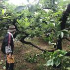 雨の中の摘果作業