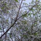 次郎柿と四季桜