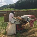 お米の脱穀作業