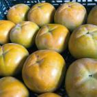 太秋柿の収穫2