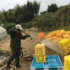 収穫コンテナの洗浄