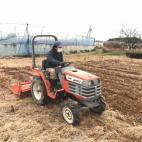 幼木の除草作業