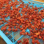干し柿の出荷作業