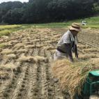 稲刈り作業2021